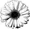 Here is the flower of gerbera visible, so a top view.